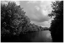 Tropical vegetation growing along canal. Everglades National Park ( black and white)