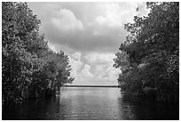 Coot Bay framed by mangroves. Everglades National Park ( black and white)