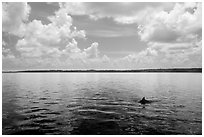 Dolphin fin in Coot Bay. Everglades National Park ( black and white)