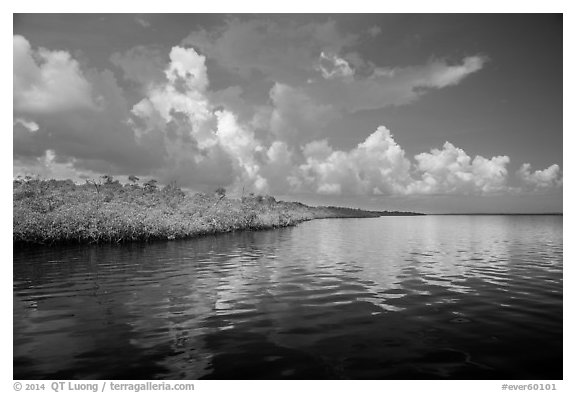 Mangrove shore of Coot Bay. Everglades National Park (black and white)