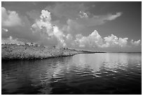 Mangrove shore of Coot Bay. Everglades National Park ( black and white)