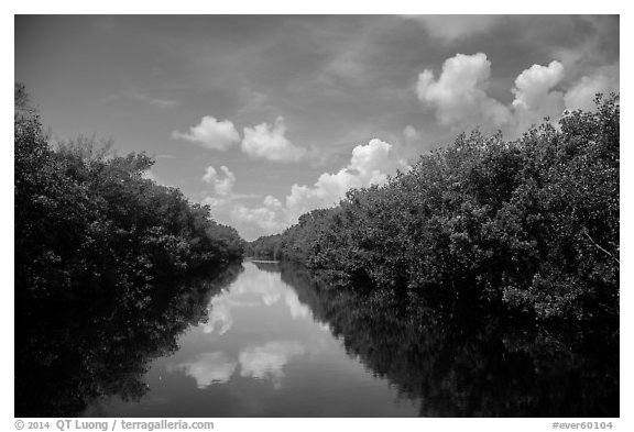 Water-level view of Buttonwood Canal. Everglades National Park (black and white)