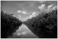 Water-level view of Buttonwood Canal. Everglades National Park ( black and white)