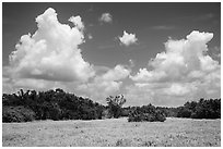 Saltwort prairie. Everglades National Park ( black and white)