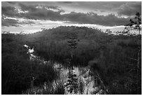 Cypress dome, summer sunset. Everglades National Park ( black and white)