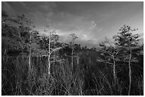 Dwarf cypress at dusk, Pa-hay-okee. Everglades National Park ( black and white)