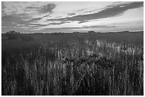 Dwarf mangroves at sunrise. Everglades National Park ( black and white)