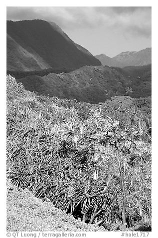 Kipahulu mountains. Haleakala National Park (black and white)