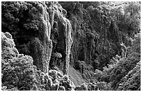 Steep Ohe o gorge walls covered with tropical vegetation, Pipiwai trail. Haleakala National Park ( black and white)