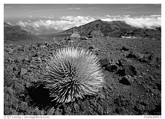 Clouds and Haleakala crater. Haleakala National Park (black and white)