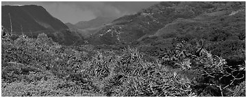 Tropical landscape with luxuriant vegetation on slopes. Haleakala National Park (Panoramic black and white)