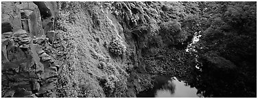 Cliffs with tropical vegetation. Haleakala National Park (Panoramic black and white)