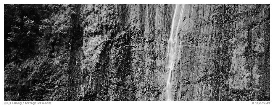 Verdant cliff with tropical waterfall. Haleakala National Park (black and white)