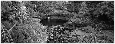 Tropical pools, waterfalls, and vegetation. Haleakala National Park (Panoramic black and white)
