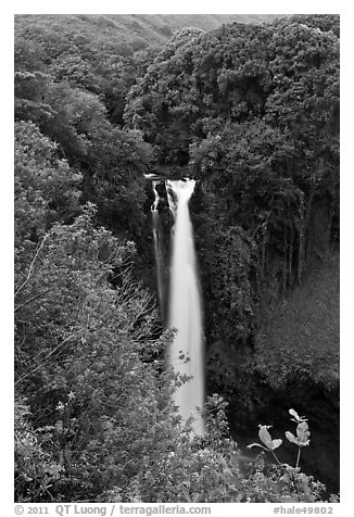 Makahiku Falls. Haleakala National Park (black and white)