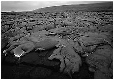 Field of lava flowing at dusk near end of Chain of Craters road. Hawaii Volcanoes National Park, Hawaii, USA. (black and white)