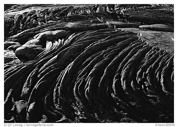 Hardened rope lava and ferns. Hawaii Volcanoes National Park (black and white)