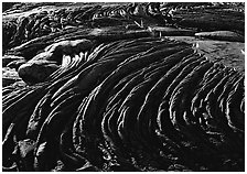 Hardened rope lava and ferns. Hawaii Volcanoes National Park ( black and white)