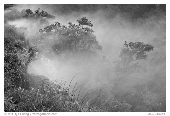 Steaming bluff and trees. Hawaii Volcanoes National Park (black and white)