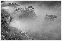 Steaming bluff and trees. Hawaii Volcanoes National Park, Hawaii, USA. (black and white)