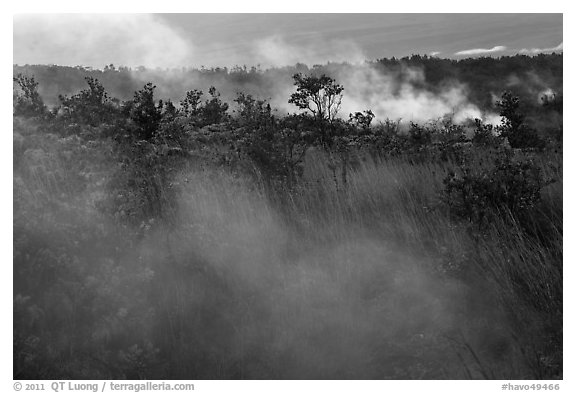 Steam vents. Hawaii Volcanoes National Park (black and white)