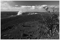 Ohia tree and Kilauea caldera. Hawaii Volcanoes National Park, Hawaii, USA. (black and white)