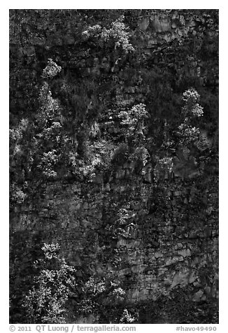 Trees growing on crater steep walls. Hawaii Volcanoes National Park (black and white)
