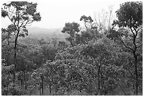 View over forest from Mauna Loa Lookout. Hawaii Volcanoes National Park ( black and white)