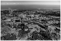Ohia shrubs on lava flow overlooking Pacific Ocean. Hawaii Volcanoes National Park, Hawaii, USA. (black and white)