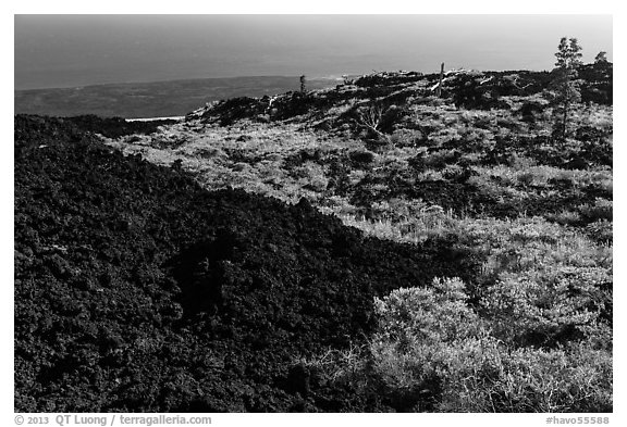 Vegetation on Aa lava field edge. Hawaii Volcanoes National Park (black and white)