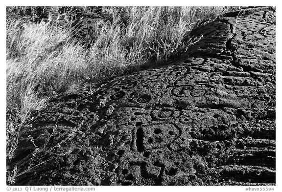 Lava slab covered with petroglyphs. Hawaii Volcanoes National Park (black and white)