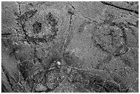 Petroglyph detail with human figure and sea turtle. Hawaii Volcanoes National Park, Hawaii, USA. (black and white)