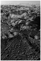 Archaeological site of Puu Loa. Hawaii Volcanoes National Park, Hawaii, USA. (black and white)
