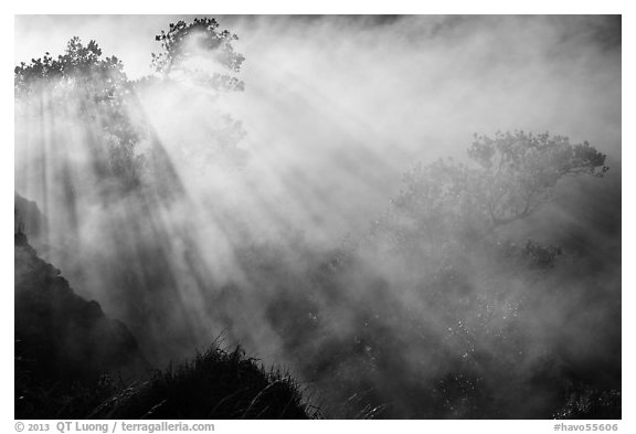 Trees and sunrays in volcanic steam. Hawaii Volcanoes National Park (black and white)