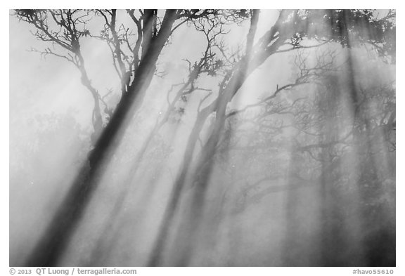 Trees and sunrays, Steaming Bluff. Hawaii Volcanoes National Park (black and white)