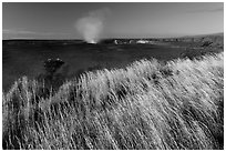 Grasses on rim of Halemaumau Crater. Hawaii Volcanoes National Park, Hawaii, USA. (black and white)
