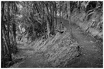 Kīlauea Iki Trail in rainforest. Hawaii Volcanoes National Park, Hawaii, USA. (black and white)