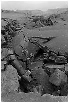 Fractured Kilauea Iki crater floor. Hawaii Volcanoes National Park ( black and white)