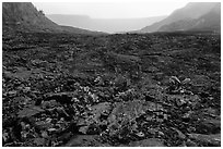 New growth on Kilauea Iki crater floor. Hawaii Volcanoes National Park, Hawaii, USA. (black and white)
