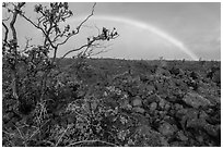 Ohelo shrub, lava field, and rainbow. Hawaii Volcanoes National Park ( black and white)