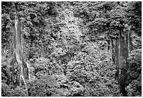 Ephemeral waterfalls in Amalau Valley, Tutuila Island. National Park of American Samoa (black and white)