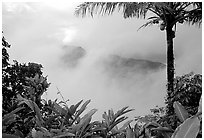 Clearing clouds from Mont Alava, Tutuila Island. National Park of American Samoa ( black and white)