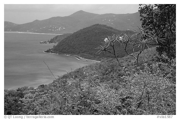 Hurricane Hole. Virgin Islands National Park (black and white)