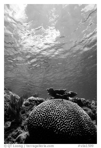 Brain coral. Virgin Islands National Park (black and white)