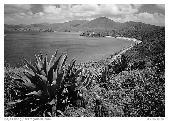 Agaves and cactus, and turquoise waters, Ram Head. Virgin Islands National Park (black and white)
