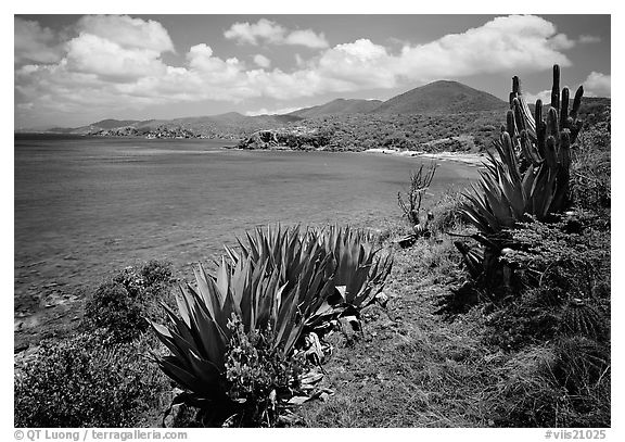 Agave and tropical turquoise waters on Ram Head. Virgin Islands National Park (black and white)