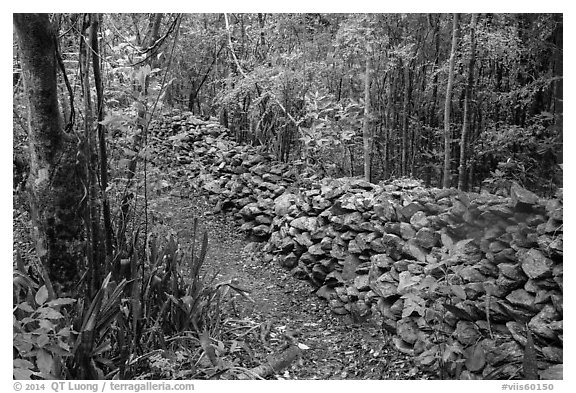 Trail bordered by rock wall. Virgin Islands National Park (black and white)