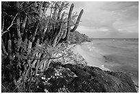 Cactus and Reef Bay. Virgin Islands National Park ( black and white)