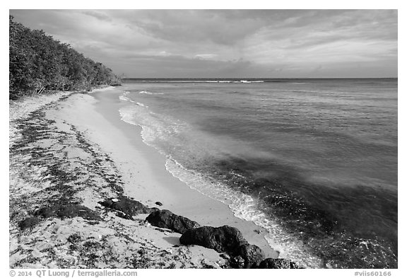 Beach and Genti Bay. Virgin Islands National Park (black and white)