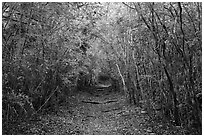 Trail in dry tropical forest. Virgin Islands National Park ( black and white)